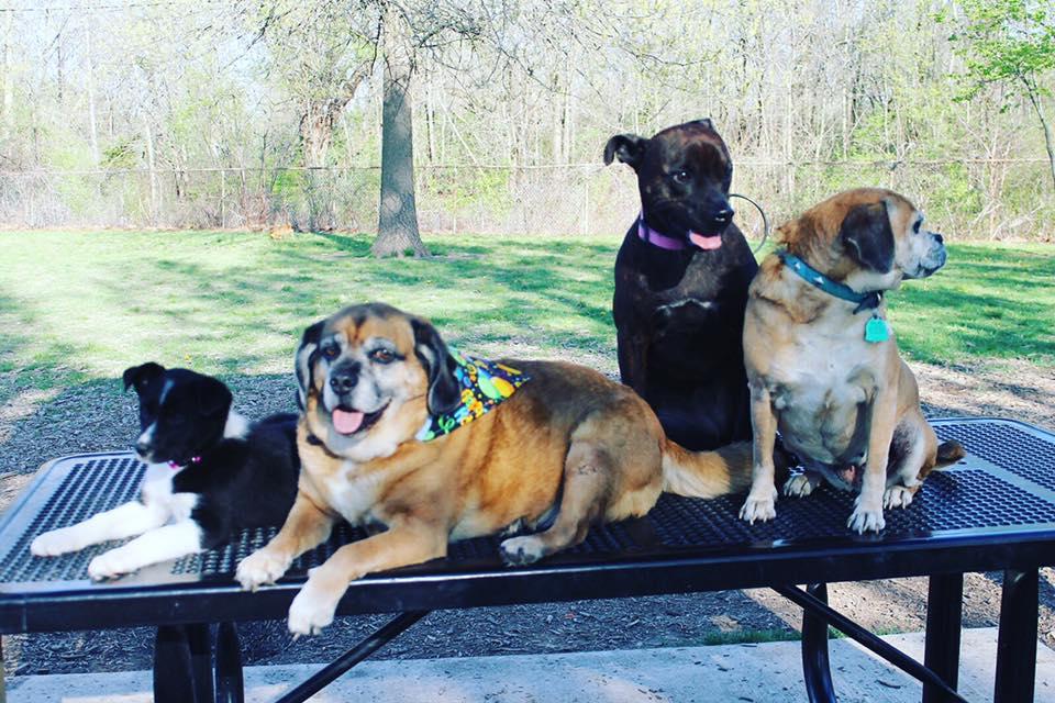 Mohr Dog Park